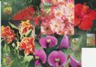 Australia Maximum Cards: APMX 171 Gardens set of 5